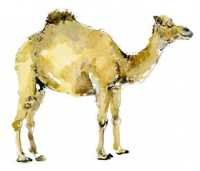 Camel a limited edition print by Madeleine Floyd