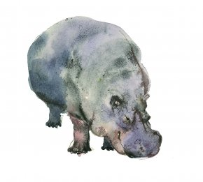 Hippo a limited edition print by Madeleine Floyd