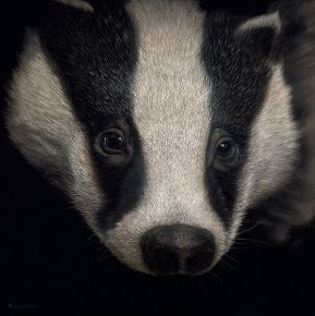 Badger a limited edition print by Annie Drew