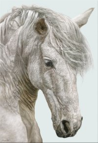 Andalusian a limited edition print by Annie Drew