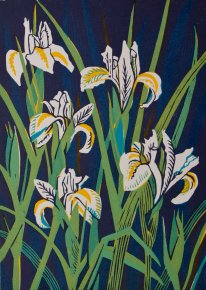 Dutch Irises a limited edition print by Linda Richardson