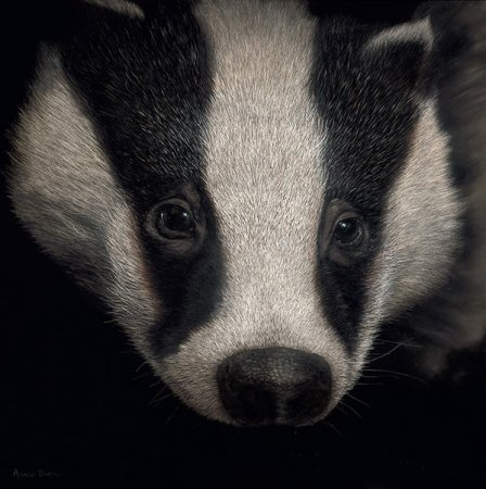 Buy Badger - art print by artist Annie Drew